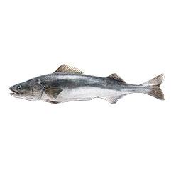 black-cod_crop