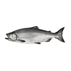 king_salmon_crop