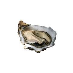 oyster_crop