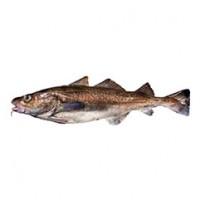 pacific-cod_crop