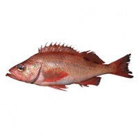 pacific-ocean-perch_crop