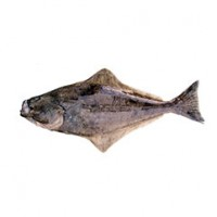 pacific_halibut_1_crop