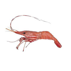 pot_shrimp_crop